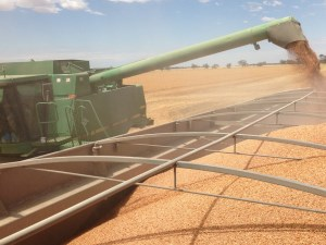 Australian lentil exports are booming article image