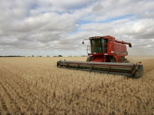Australian farm production tipped to reach $58.4 billion article image