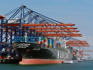 More pain ahead for shipping companies: Coface article image