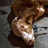 Ludwig in Jakarta to discuss live export ban article image