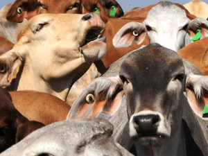 New committee to review Australian standards for export of livestock article image