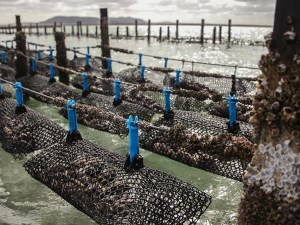 Australian aquaculture set to double in value article image