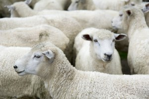 Live export to continue article image