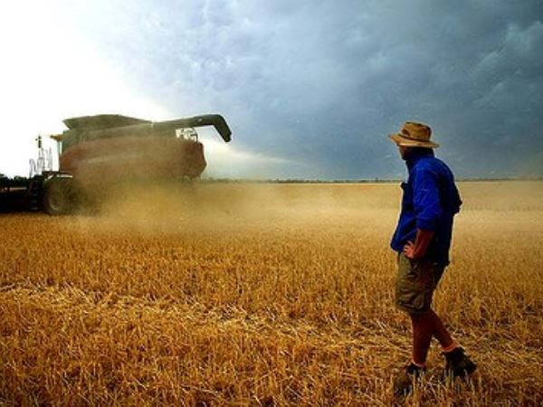 News_Farm export earnings tipped to fall next year